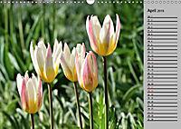 Blütenschau 2019 (Wandkalender 2019 DIN A3 quer) - Produktdetailbild 4