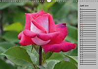 Blütenschau 2019 (Wandkalender 2019 DIN A3 quer) - Produktdetailbild 6