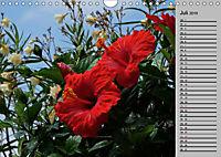Blütenschau 2019 (Wandkalender 2019 DIN A4 quer) - Produktdetailbild 7