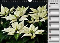 Blütenschau 2019 (Wandkalender 2019 DIN A4 quer) - Produktdetailbild 12