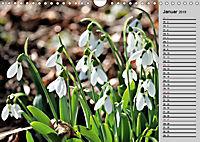 Blütenschau 2019 (Wandkalender 2019 DIN A4 quer) - Produktdetailbild 1