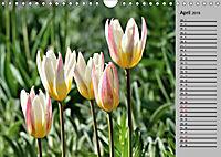 Blütenschau 2019 (Wandkalender 2019 DIN A4 quer) - Produktdetailbild 4