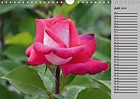 Blütenschau 2019 (Wandkalender 2019 DIN A4 quer) - Produktdetailbild 6