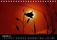 Blütenzauber - Blumen und Blüten zu jeder Jahreszeit (Tischkalender 2019 DIN A5 quer) - Produktdetailbild 12