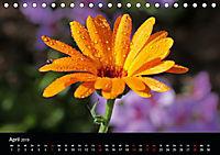 Blütenzauber - Blumen und Blüten zu jeder Jahreszeit (Tischkalender 2019 DIN A5 quer) - Produktdetailbild 4