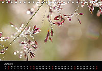 Blütenzauber - Blumen und Blüten zu jeder Jahreszeit (Tischkalender 2019 DIN A5 quer) - Produktdetailbild 6
