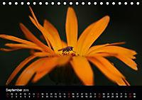 Blütenzauber - Blumen und Blüten zu jeder Jahreszeit (Tischkalender 2019 DIN A5 quer) - Produktdetailbild 9