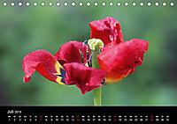 Blütenzauber - Blumen und Blüten zu jeder Jahreszeit (Tischkalender 2019 DIN A5 quer) - Produktdetailbild 7