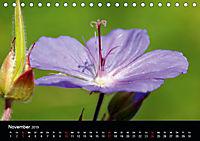 Blütenzauber - Blumen und Blüten zu jeder Jahreszeit (Tischkalender 2019 DIN A5 quer) - Produktdetailbild 11