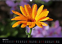 Blütenzauber - Blumen und Blüten zu jeder Jahreszeit (Wandkalender 2019 DIN A3 quer) - Produktdetailbild 4