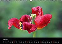 Blütenzauber - Blumen und Blüten zu jeder Jahreszeit (Wandkalender 2019 DIN A3 quer) - Produktdetailbild 7