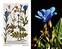 Blumen einst und jetzt - Produktdetailbild 2