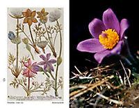 Blumen einst und jetzt - Produktdetailbild 1