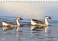Boarisch g'schaut - Vom Haarsee bis zum Isarwinkel (Tischkalender 2019 DIN A5 quer) - Produktdetailbild 4