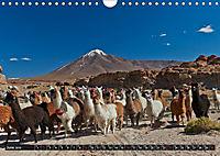 Bolivia Andean landscapes / UK-Version (Wall Calendar 2019 DIN A4 Landscape) - Produktdetailbild 6