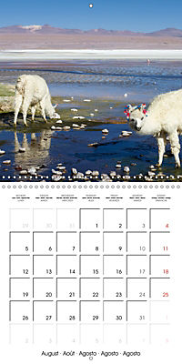 Bolivia (Wall Calendar 2019 300 × 300 mm Square) - Produktdetailbild 8