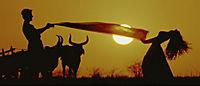 Bollywood - Die grösste Liebesgeschichte aller Zeiten - Produktdetailbild 3