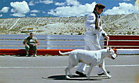 Bombón - Eine Geschichte aus Patagonien - Produktdetailbild 2