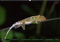 Borneo - Tierparadies Regenwald (Wandkalender 2019 DIN A2 quer) - Produktdetailbild 8