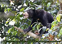 Borneo - Tierparadies Regenwald (Wandkalender 2019 DIN A2 quer) - Produktdetailbild 7