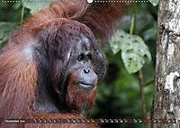 Borneo - Tierparadies Regenwald (Wandkalender 2019 DIN A2 quer) - Produktdetailbild 11