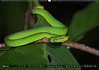 Borneo - Tierparadies Regenwald (Wandkalender 2019 DIN A2 quer) - Produktdetailbild 5