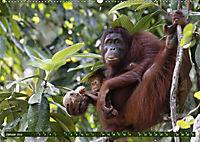 Borneo - Tierparadies Regenwald (Wandkalender 2019 DIN A2 quer) - Produktdetailbild 1