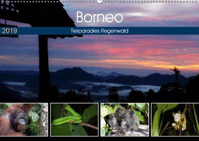 Borneo - Tierparadies Regenwald (Wandkalender 2019 DIN A2 quer), Michael Herzog