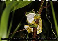 Borneo - Tierparadies Regenwald (Wandkalender 2019 DIN A2 quer) - Produktdetailbild 2