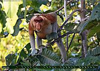 Borneo - Tierparadies Regenwald (Wandkalender 2019 DIN A2 quer) - Produktdetailbild 6