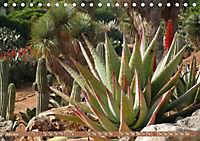 BOTANICACTUS Mallorcas Kakteengarten (Tischkalender 2019 DIN A5 quer) - Produktdetailbild 6