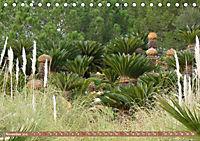 BOTANICACTUS Mallorcas Kakteengarten (Tischkalender 2019 DIN A5 quer) - Produktdetailbild 11