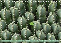 BOTANICACTUS Mallorcas Kakteengarten (Tischkalender 2019 DIN A5 quer) - Produktdetailbild 3