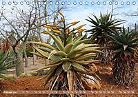 BOTANICACTUS Mallorcas Kakteengarten (Tischkalender 2019 DIN A5 quer) - Produktdetailbild 2
