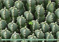 BOTANICACTUS Mallorcas Kakteengarten (Wandkalender 2019 DIN A2 quer) - Produktdetailbild 3