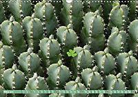 BOTANICACTUS Mallorcas Kakteengarten (Wandkalender 2019 DIN A3 quer) - Produktdetailbild 3