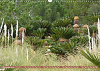 BOTANICACTUS Mallorcas Kakteengarten (Wandkalender 2019 DIN A3 quer) - Produktdetailbild 11