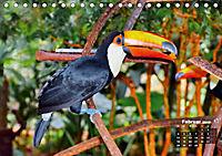 Brasilien. Der Iguazú-Nationalpark (Tischkalender 2019 DIN A5 quer) - Produktdetailbild 2