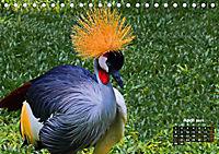 Brasilien. Der Iguazú-Nationalpark (Tischkalender 2019 DIN A5 quer) - Produktdetailbild 4
