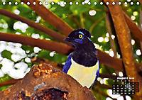 Brasilien. Der Iguazú-Nationalpark (Tischkalender 2019 DIN A5 quer) - Produktdetailbild 8