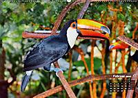 Brasilien. Der Iguazú-Nationalpark (Wandkalender 2019 DIN A2 quer) - Produktdetailbild 2