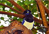 Brasilien. Der Iguazú-Nationalpark (Wandkalender 2019 DIN A2 quer) - Produktdetailbild 8