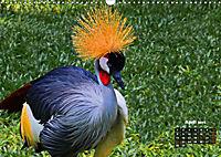 Brasilien. Der Iguazú-Nationalpark (Wandkalender 2019 DIN A3 quer) - Produktdetailbild 4