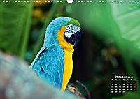 Brasilien. Der Iguazú-Nationalpark (Wandkalender 2019 DIN A3 quer) - Produktdetailbild 10