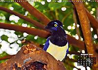 Brasilien. Der Iguazú-Nationalpark (Wandkalender 2019 DIN A3 quer) - Produktdetailbild 8