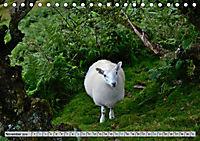 Brecon Beacons - Magisches Südwales (Tischkalender 2019 DIN A5 quer) - Produktdetailbild 11