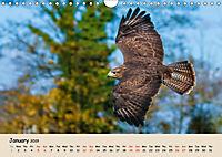 British Birds of Prey (Wall Calendar 2019 DIN A4 Landscape) - Produktdetailbild 1