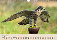 British Birds of Prey (Wall Calendar 2019 DIN A4 Landscape) - Produktdetailbild 5