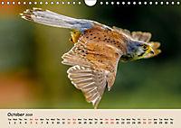 British Birds of Prey (Wall Calendar 2019 DIN A4 Landscape) - Produktdetailbild 10