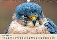 British Birds of Prey (Wall Calendar 2019 DIN A4 Landscape) - Produktdetailbild 9